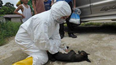 Photo of Sorotan 2019: Jerebu, rabies jadi ujian buat Sarawak