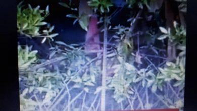 Photo of Ibu 7 anak pinjam beras segenggam daripada jiran tetangga