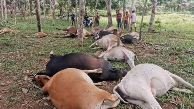 Animal Malaysia