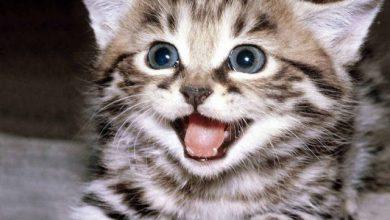 Photo of Wanita warga emas maut dicakar kucing peliharaannya